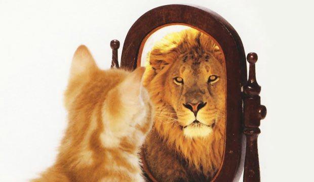 cat-lion-mirror